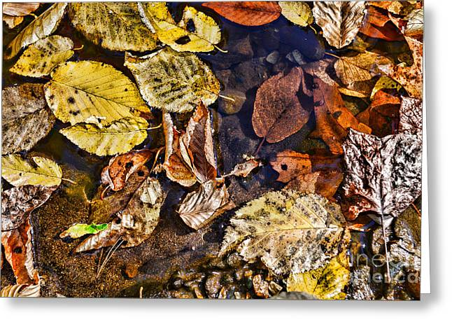 Autumn The Color Of Nature Greeting Card