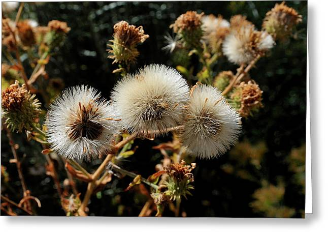 Autumn Thistle Greeting Card