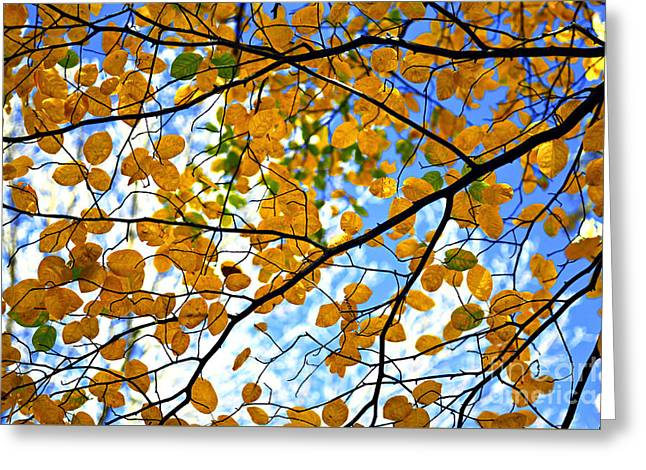 Autumn Tree Branches Greeting Card