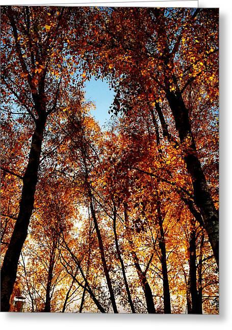 Autumn Tree Greeting Card by Niki Mastromonaco