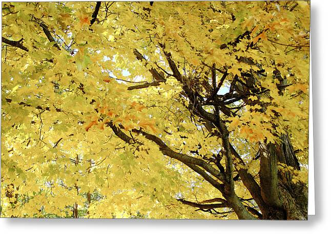 Greeting Card featuring the photograph Autumn Tree by Raymond Earley