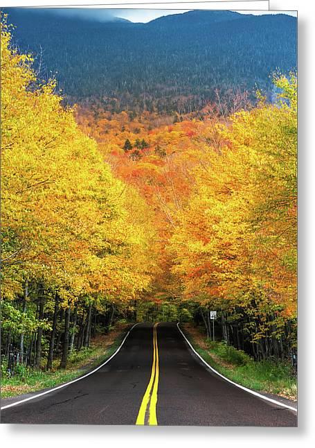 Autumn Tree Tunnel Greeting Card