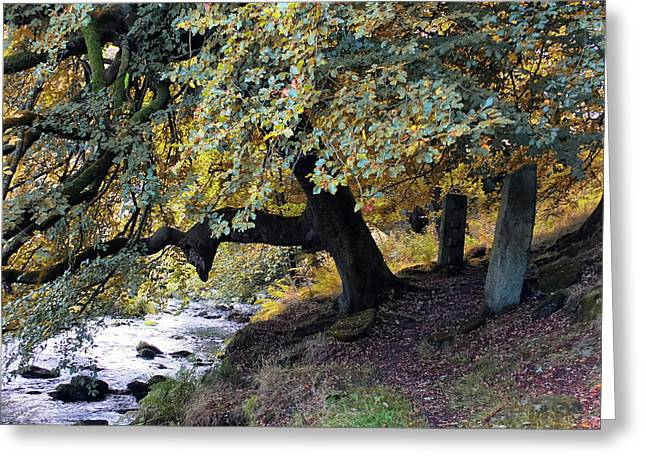 Autumn Trees And Stones By The Water Greeting Card by Philip Openshaw