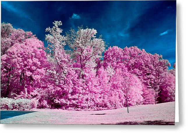Autumn Trees In Infrared Greeting Card by Louis Dallara