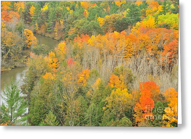 Autumn Treetops At The River Bend Greeting Card by Terri Gostola