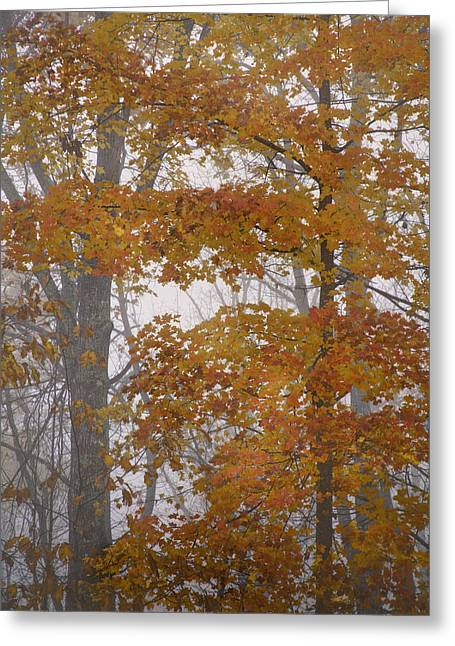 Rob Travis Greeting Cards - Autumn Tresses Greeting Card by Rob Travis