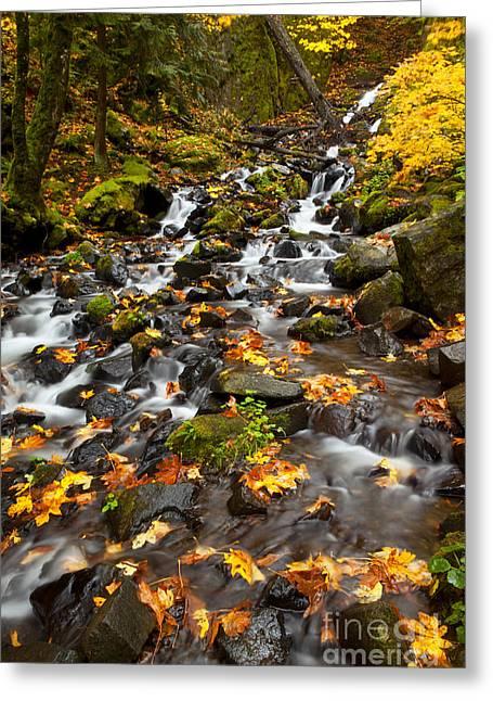 Autumn Tumbles Down Greeting Card by Mike  Dawson