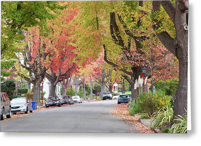 Autumn Urban Forest  Greeting Card by Sheila Fitzgerald