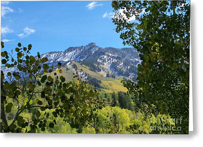 Autumn View Through Aspen Leaves Greeting Card