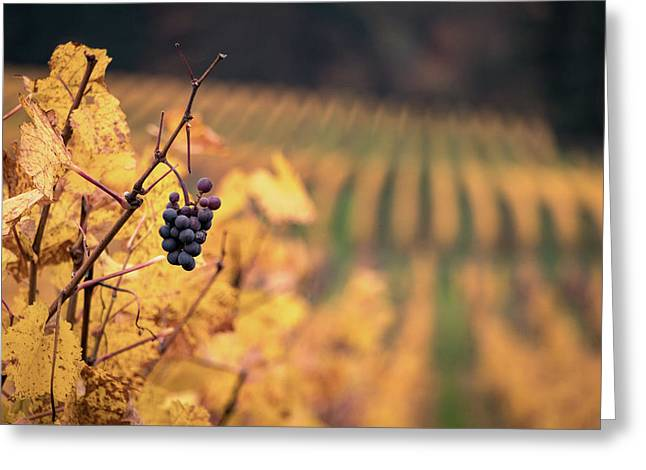 Autumn Vineyard Greeting Card by Jason Clarke