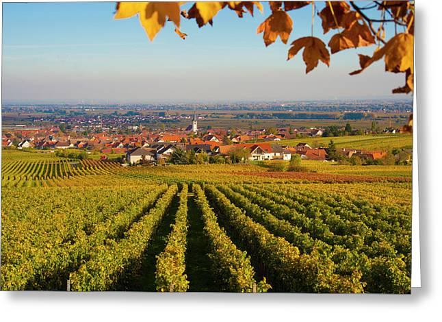 Autumn Vineyard  Pfaizerwald Region Germany Greeting Card