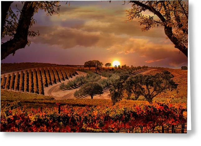 Autumn Vineyard Greeting Card by Stephanie Laird