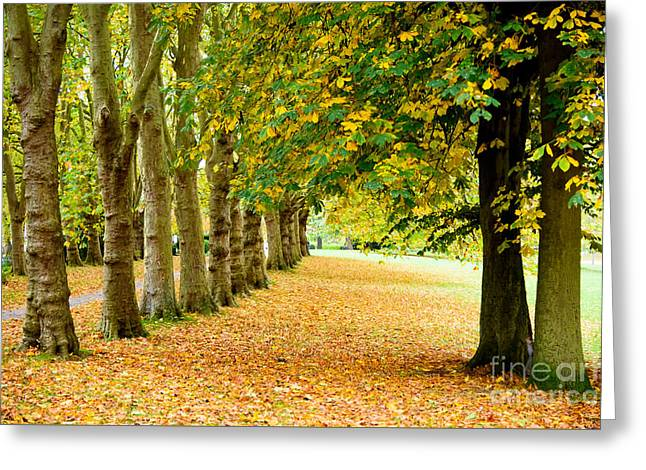 Autumn Walk Greeting Card by Colin Rayner