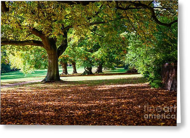 Autumn Walk In The Park Greeting Card by Colin Rayner