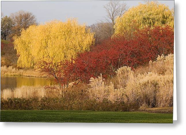 Willow Lake Greeting Cards - Autumn Willow Trees Greeting Card by Elvira Butler