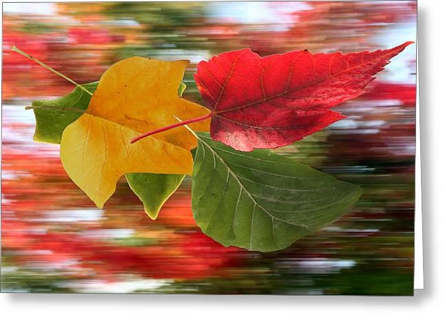 Autumn Wind Greeting Card by Barbara  White