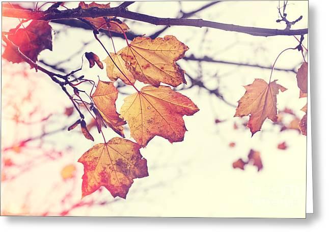 Autumn Wonder - Natalie Kinnear Photography Greeting Card