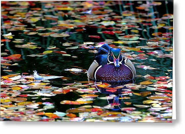 Autumn Wood Duck Greeting Card