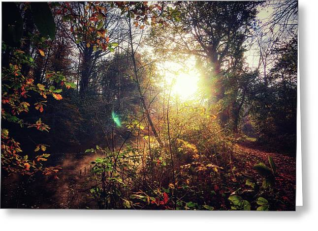 Autumn Woodland Greeting Card