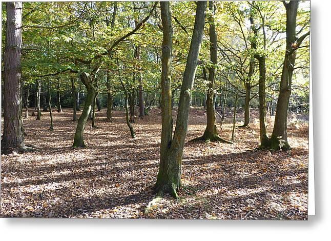 Autumn Woodland Floor Leaves Sunshine And Shadows Greeting Card