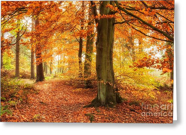 Autumn Woodland Greeting Card by Janet Burdon