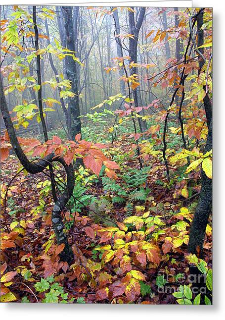 Autumn Woodland Greeting Card by Thomas R Fletcher