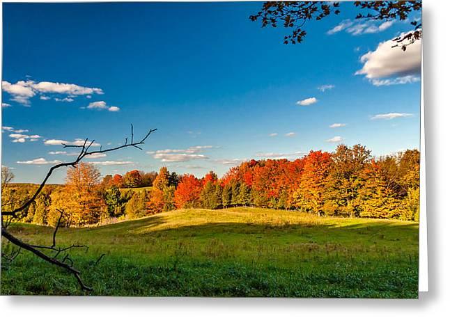 Autumn Woodlots Greeting Card by Steve Harrington