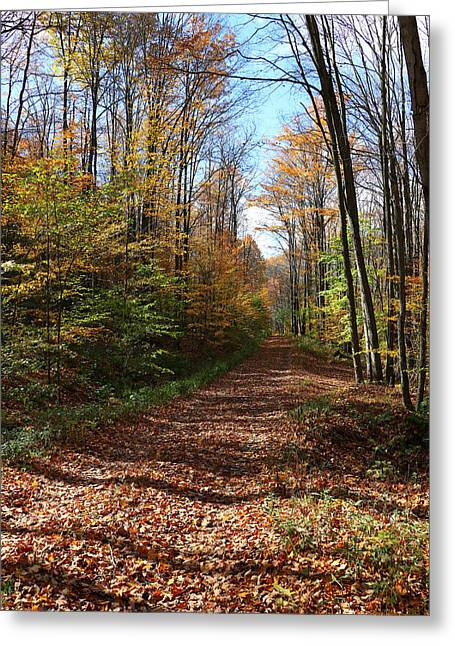 Autumn Woods Road Greeting Card