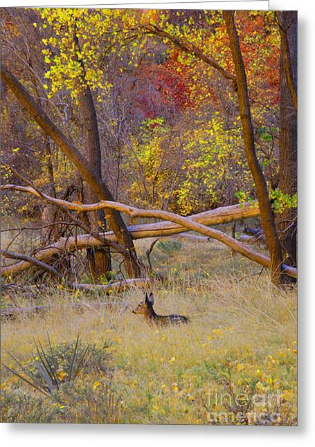 Autumn Yearling Greeting Card by Dennis Hammer
