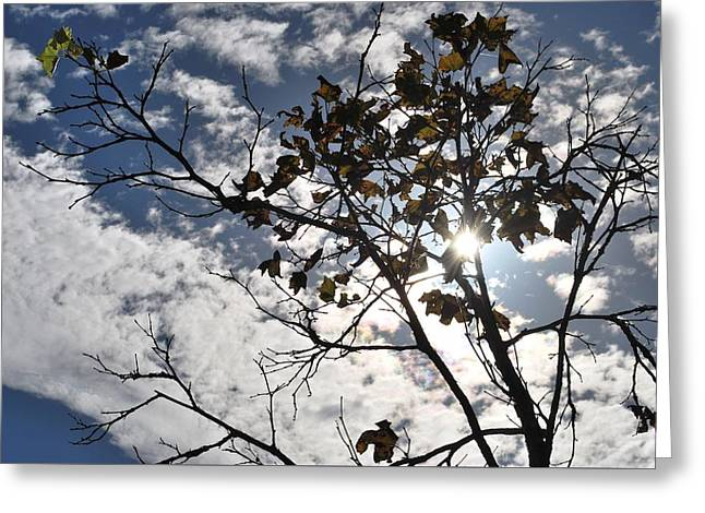 Autumn Yellow Back-lit Tree Branch Greeting Card by Matt Harang