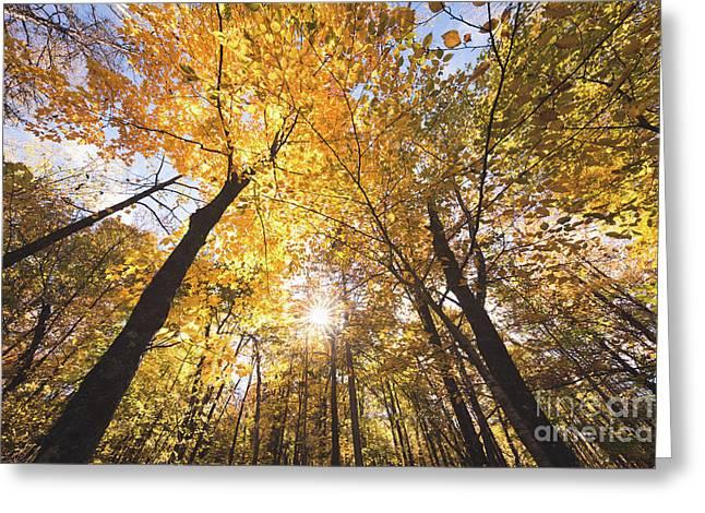 Autumn Yellow Greeting Card by Ernesto Ruiz