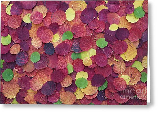 Autumnal Aspen Leaves Greeting Card