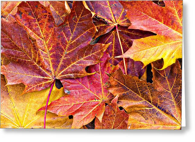 Frond Greeting Cards - Autumnal Carpet Greeting Card by Meirion Matthias