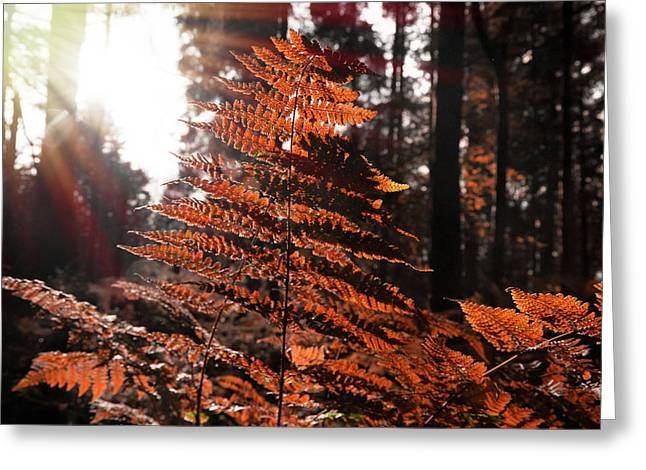 Autumnal Evening Greeting Card