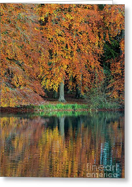 Autumnal Glory Greeting Card by Tim Gainey