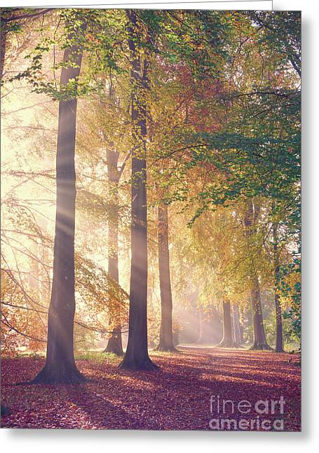 Autumnal Mists Greeting Card