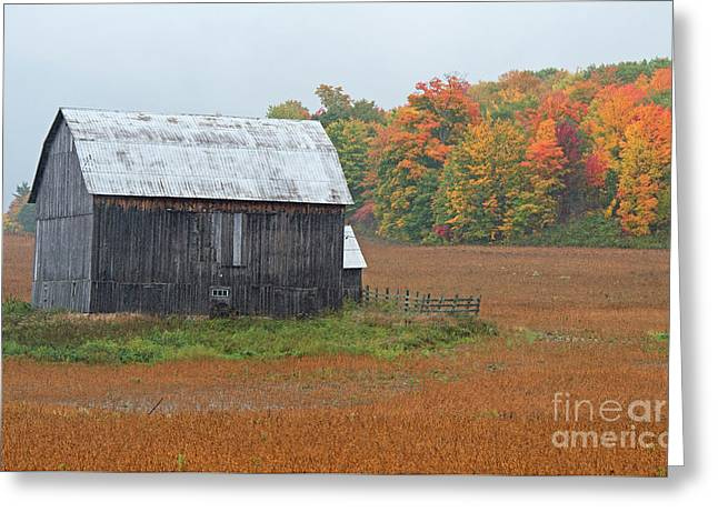 Greeting Card featuring the photograph Autumnal.. by Nina Stavlund