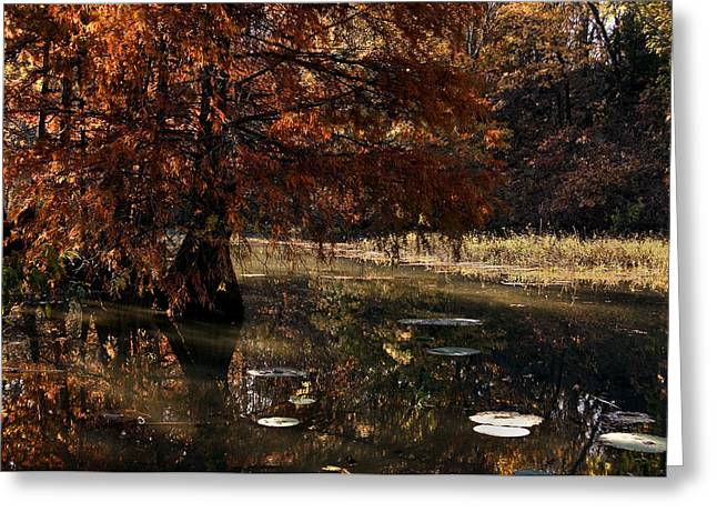 Greeting Card featuring the photograph Autumnal Solace At Lake Murray by Tamyra Ayles