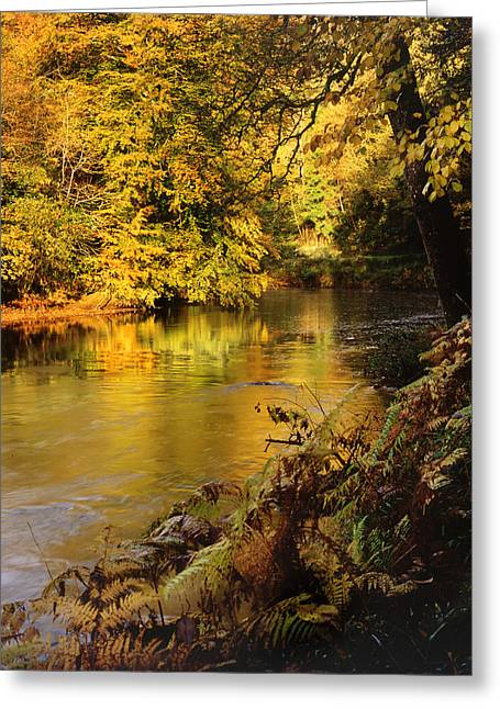 Autumnal Tamar River Devon Greeting Card