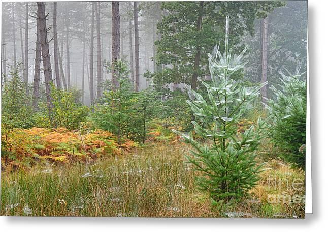 Autumnal Tinge Greeting Card by Richard Thomas