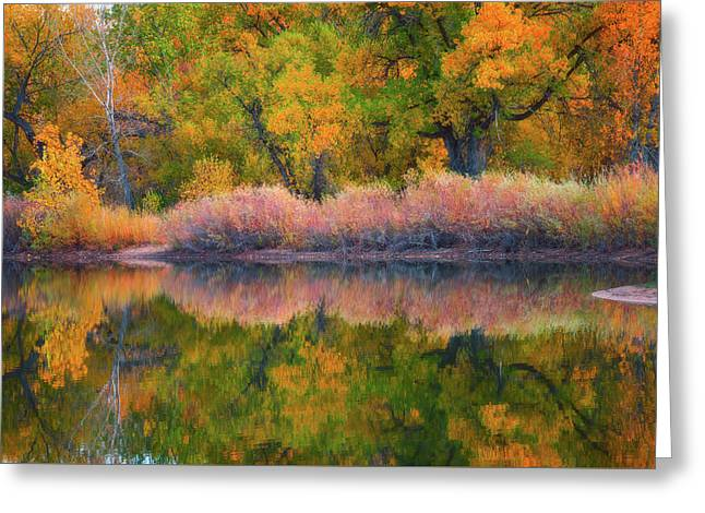 Autumn's Color Palette  Greeting Card by Darren White