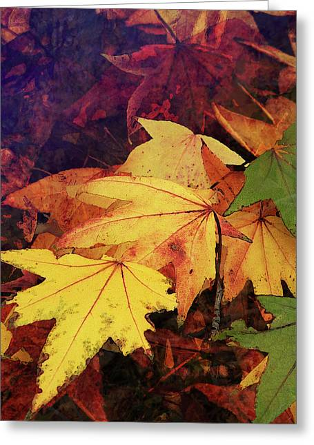 Autumns Colors Greeting Card by Robert Ball