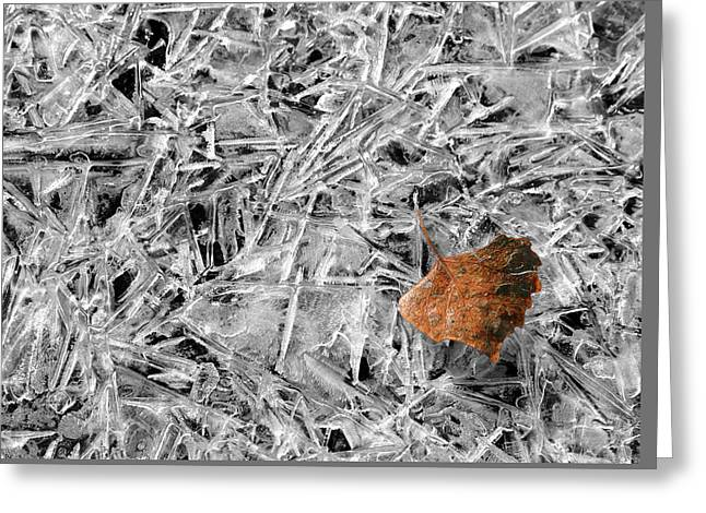 Greeting Card featuring the photograph Autumn's End by Marie Leslie