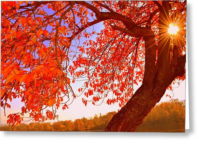 Autumn's Glory Greeting Card by Marla McPherson