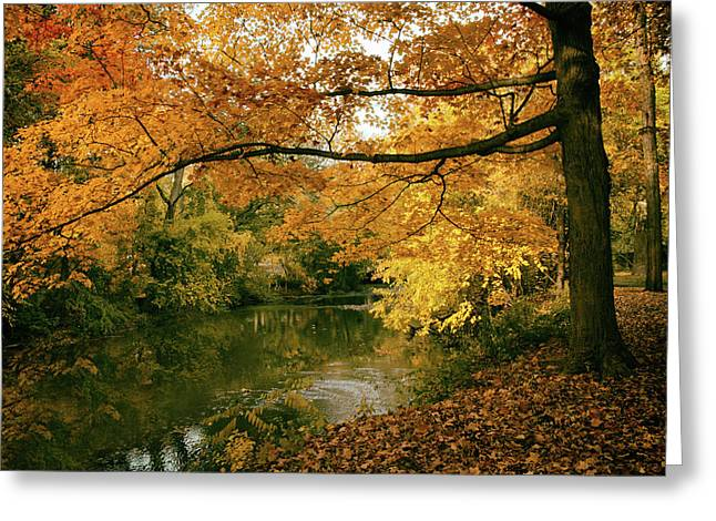 Autumn's Golden Tones Greeting Card by Jessica Jenney