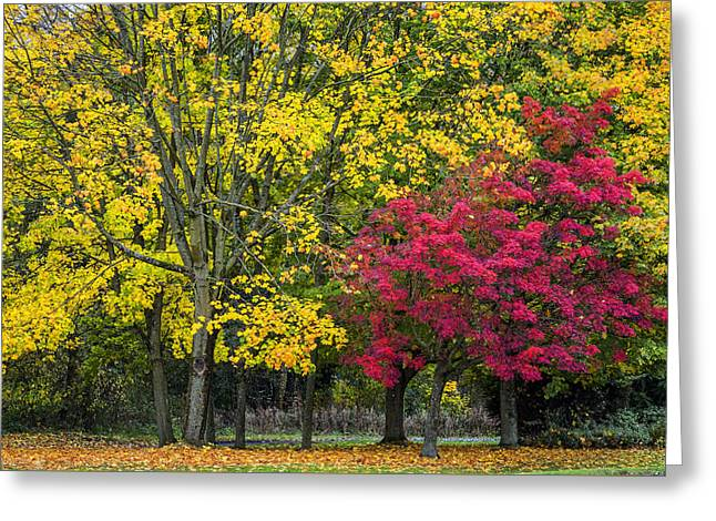 Autumn's Peak Greeting Card by Jeremy Lavender Photography