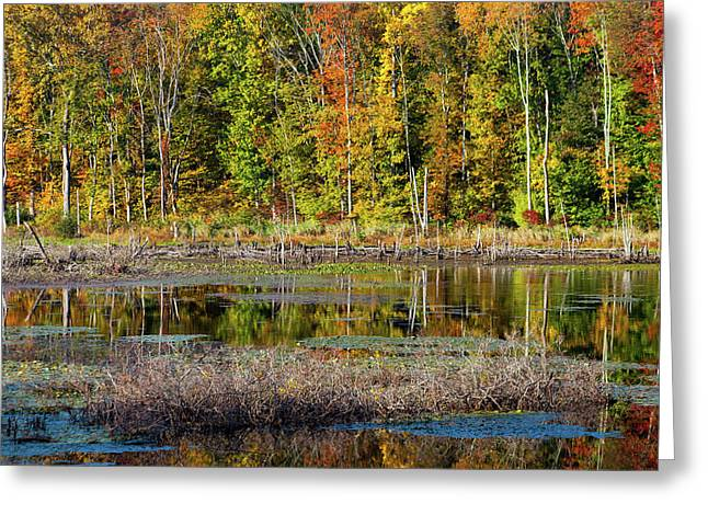 Greeting Card featuring the photograph Autumns Quiet Moment by Karol Livote