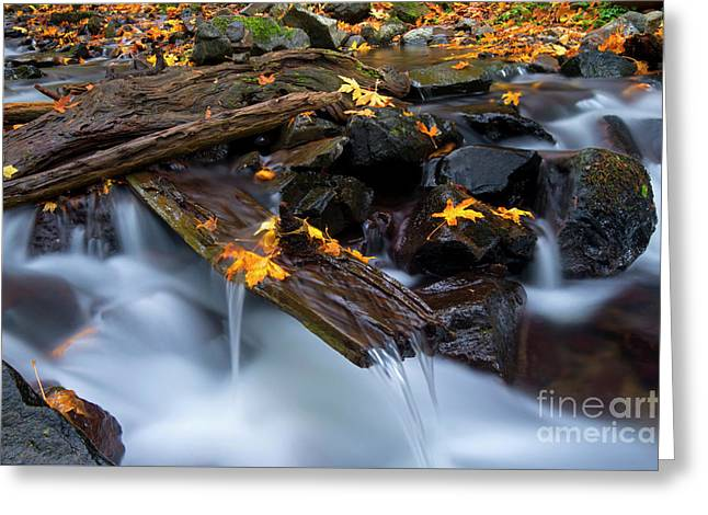 Autumn's Spillway Greeting Card by Mike Dawson
