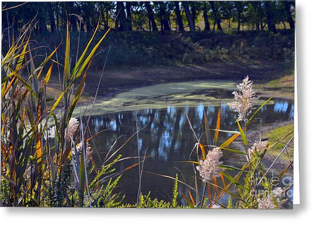 Autumn's Tranquility Greeting Card by Robyn King