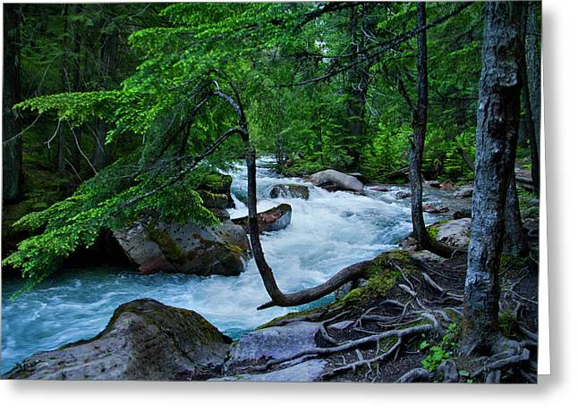 Avalanche Creek Greeting Card